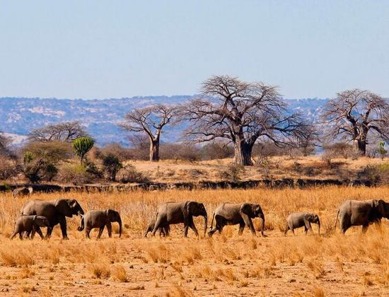 Nyika Discovery - Ngorongoro crater, Tarangire and Serengeti national park - 6 days luxury safari 01