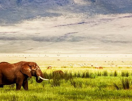 Nyika Discovery - Ngorongoro crater, Tarangire and Serengeti national park - 6 days luxury safari 02