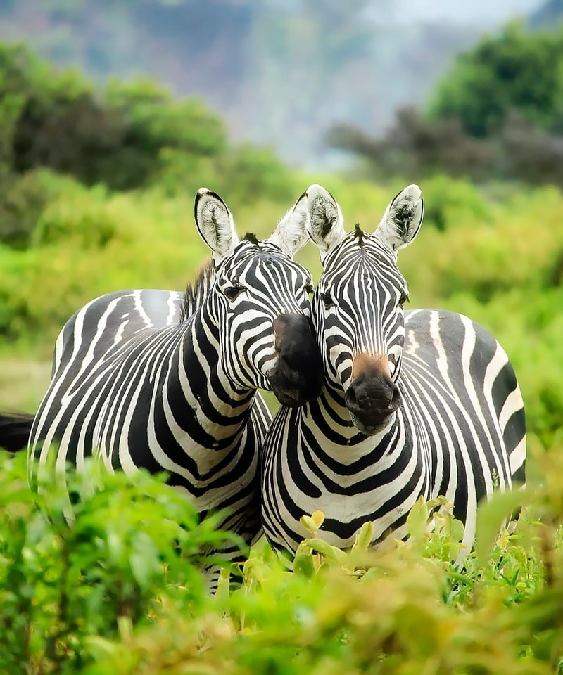 Nyika Discovery - Ngorongoro crater, Tarangire and Serengeti national park 6 days luxury safari
