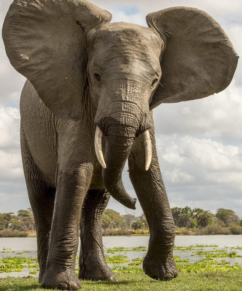 Nyika Discovery - Northern Tanzania safari - 15 days