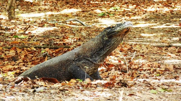 Nyika Discovery - Saanane island national park 8