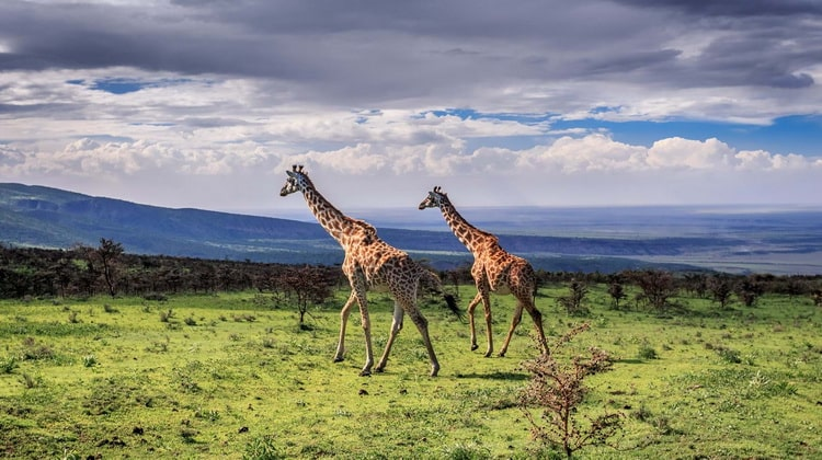 Nyika Discovery - Safari Destinations - Katavi national park 8