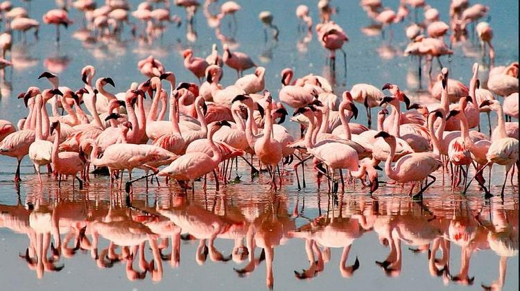 Nyika Discovery - Safari Destinations - Lake Manyara 1