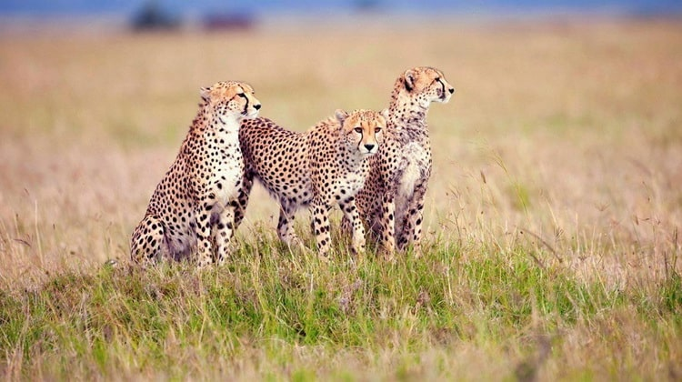 Nyika Discovery - Safari Destinations - Lake Manyara 2