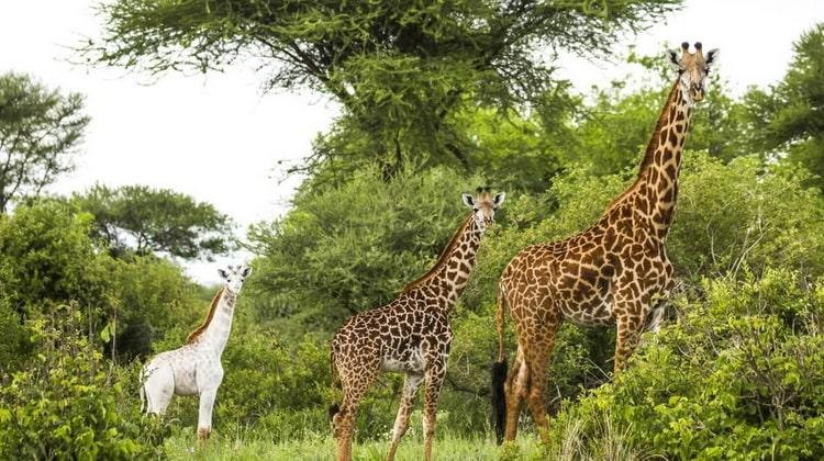 Nyika Discovery - Safari Destinations - Lake Manyara 4