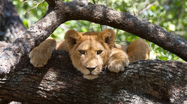 Nyika Discovery - Safari Destinations - Lake Manyara 5