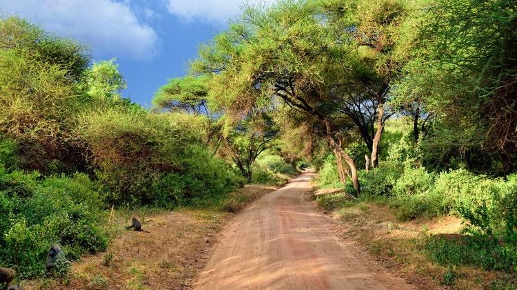 Nyika Discovery - Safari Destinations - Lake Manyara 7