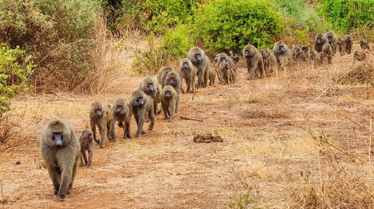 Nyika Discovery - Safari Destinations - Lake Manyara 8