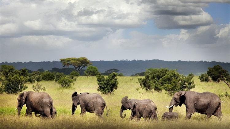 Nyika Discovery - Safari Destinations - Ruaha national park 2
