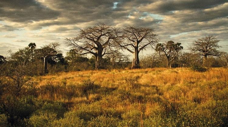 Nyika Discovery - Safari Destinations - Ruaha national park 3
