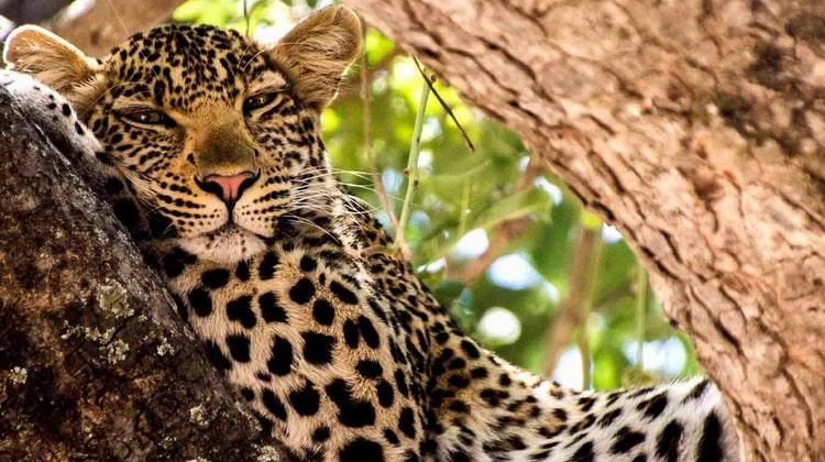 Nyika Discovery - Safari Destinations - Ruaha national park 8