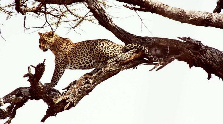 Nyika Discovery - Safari Destinations - Sasdani national park 3