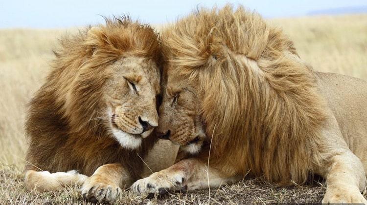 Nyika Discovery - Safari Destinations - Sasdani national park 4