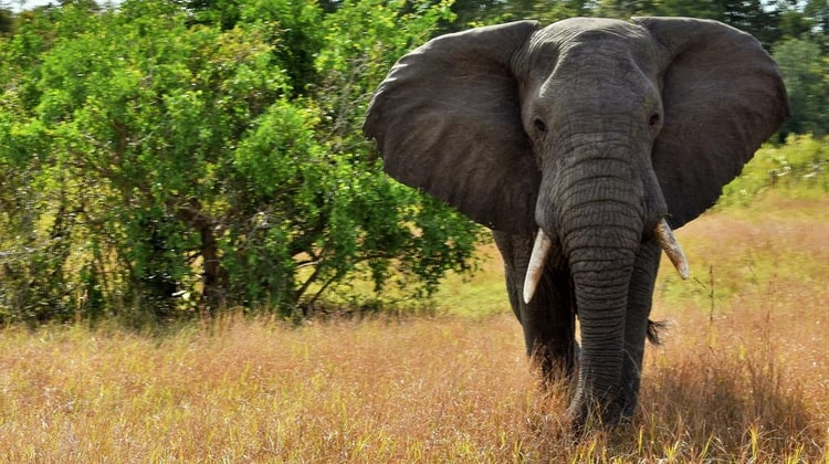 Nyika Discovery - Safari Destinations - Sasdani national park 6