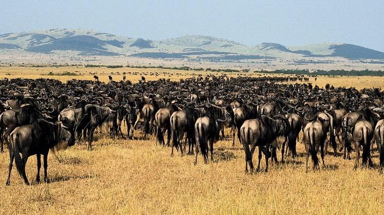 Nyika Discovery - Safari Destinations - Sasdani national park 7