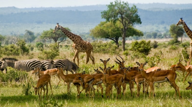 Nyika Discovery - Safari Destinations - Selous game reserve 5
