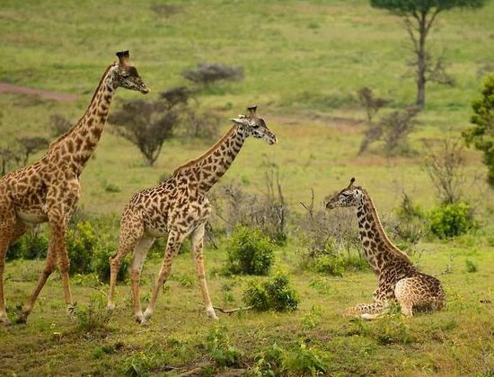 Nyika Discovery - Safari to Arusha National Park 1 day 03
