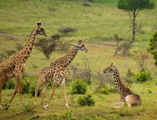 Nyika Discovery - Safari to Lake Manyara and Ngorongoro Crater - 2 Day safari 04