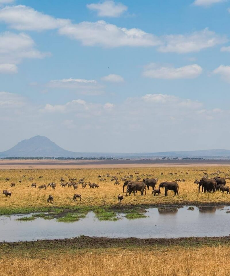 Nyika Discovery - Safari to Lake Manyara and Ngorongoro Crater - 2 Day safari