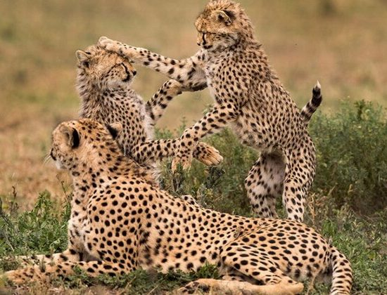 Nyika Discovery - Safari to Lake Manyara, Ngorongoro Crater and Tarangire National Park - 3 Day safari 04