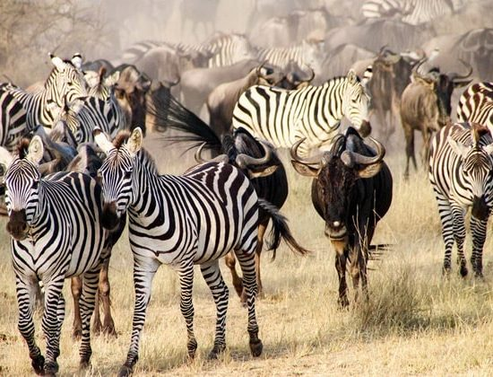 Nyika Discovery - safari to lake Manyara, Serengeti, Ngorongoro crater and Tarangire 5 days mid range 03