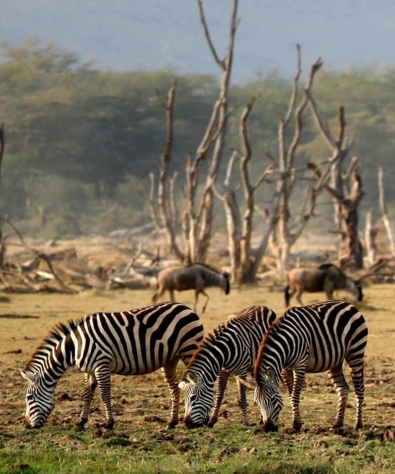 Nyika Discovery - safari to lake Manyara, Serengeti, Ngorongoro crater and Tarangire 5 days mid range