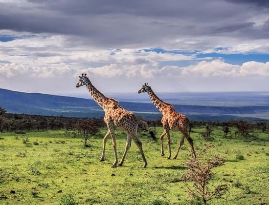 Nyika Discovery - Safari to Tarangire National Park & Ngorongoro Crater - 2 Day 03