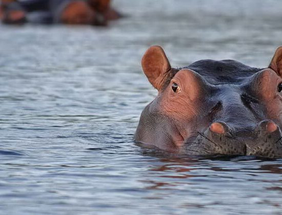 Nyika Discovery - Safari to Tarangire National Park & Ngorongoro Crater - 2 Day 02