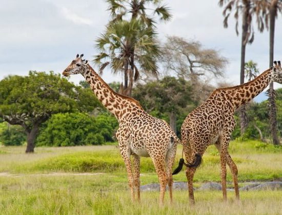 Nyika Discovery - Safari to Tarangire National Park & Ngorongoro Crater - 2 Day 04