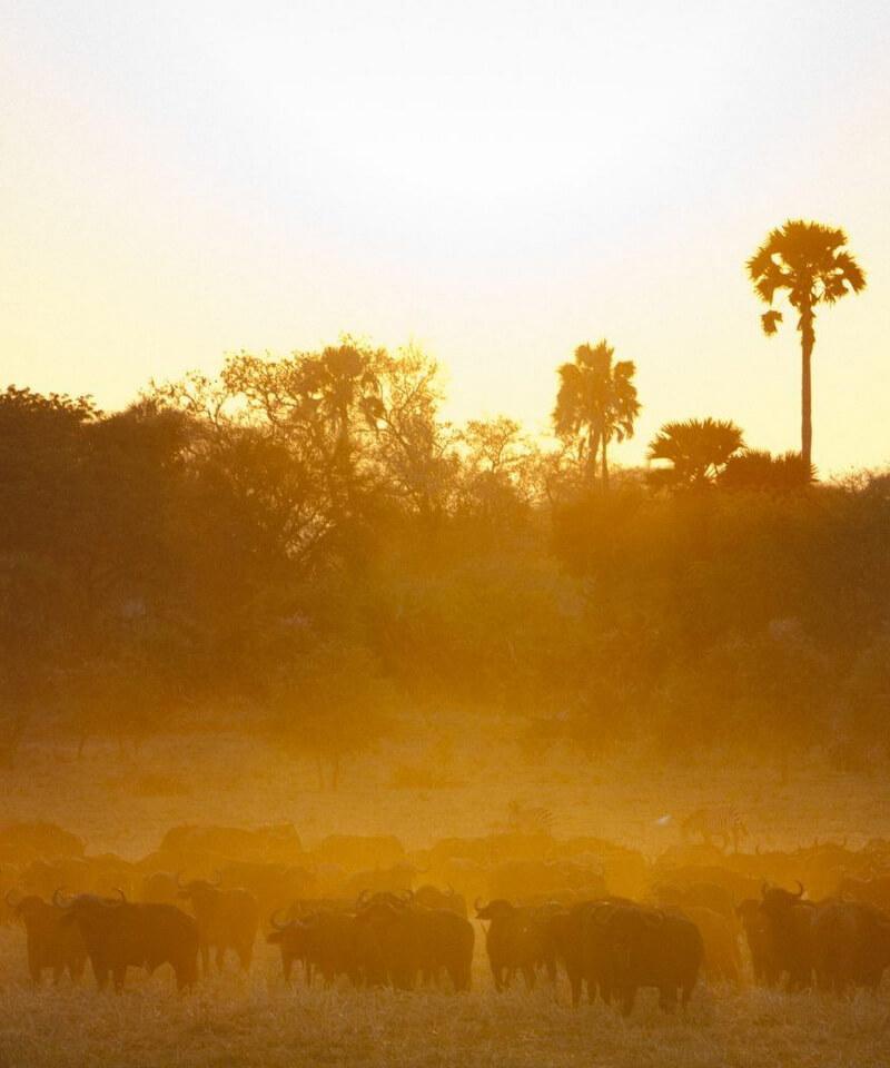 Nyika Discovery - Safari to Tarangire National Park & Ngorongoro Crater - 2 Day