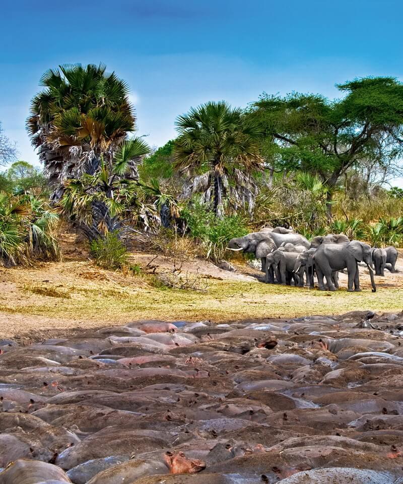Nyika Discovery - Safari to Tarangire, Ngorongoro Crater and Serengeti - 4 Days