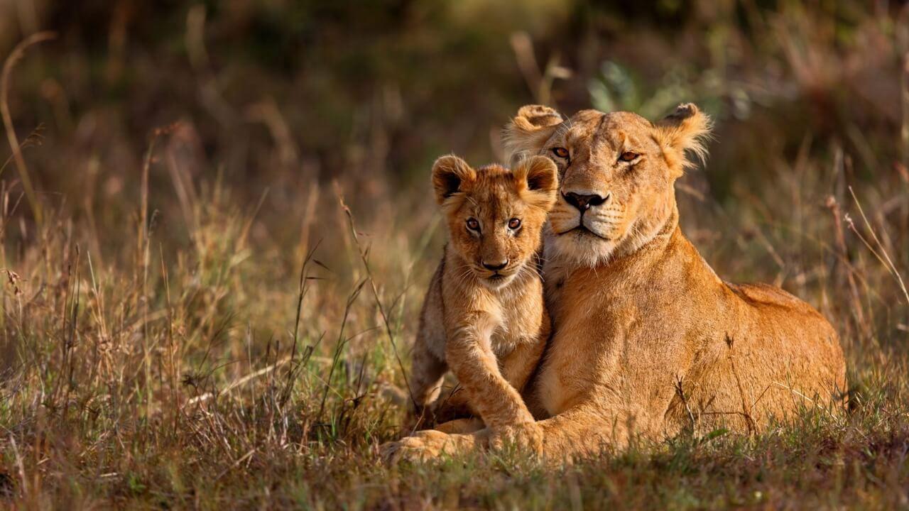 Nyika Discovery - Safari tours