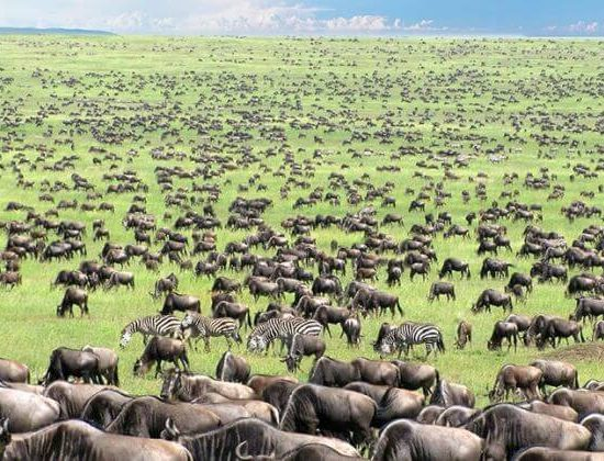 Nyika Discovery - Serengeti and Zanzbar beach vacation 03