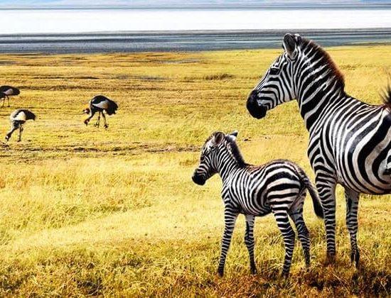 Nyika Discovery - Serengeti and Zanzibar beach vacation 04