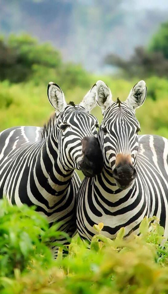 Nyika Discovery - Serengeti and Zanzbar beach vacation