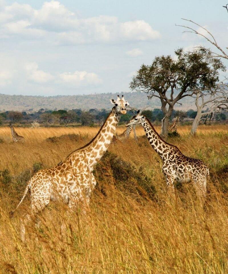 Nyika Discovery - Tarangire national park, Serengeti national park and Ngorongoro conservation area - 4 days 01