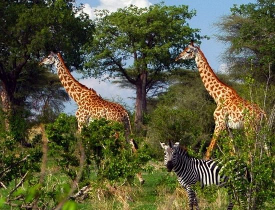 Nyika Discovery - Tarangire national park, Serengeti national park and Ngorongoro conservation area - 4 days 04