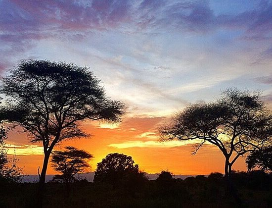 Nyika Discovery - Tarangire national park, Serengeti national park and Ngorongoro conservation area - 6 days 02