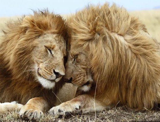 Nyika Discovery - Tarangire national park, Serengeti national park and Ngorongoro conservation area - 6 days 03