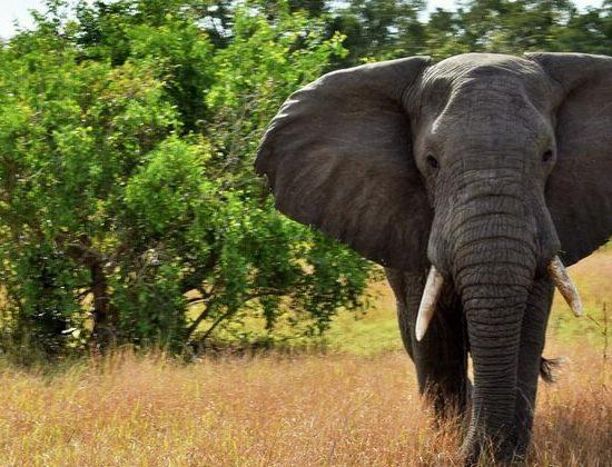 Nyika Discovery - Tarangire national park, Serengeti national park and Ngorongoro conservation area - 6 days 04