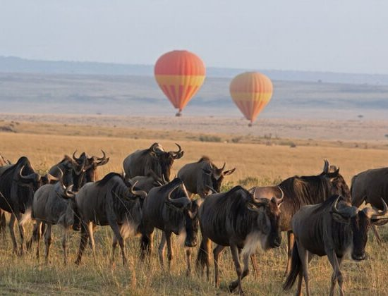 Nyika Discovery - lake Manyara, Serengeti, Ngorongoro crater and Tarangire 6 days mid range safari 04