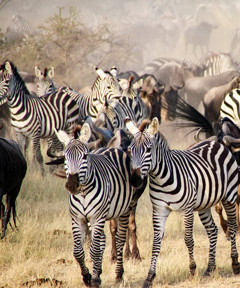 Nyika Discovery - lake Manyara, Serengeti, Ngorongoro crater and Tarangire 6 days mid range safari
