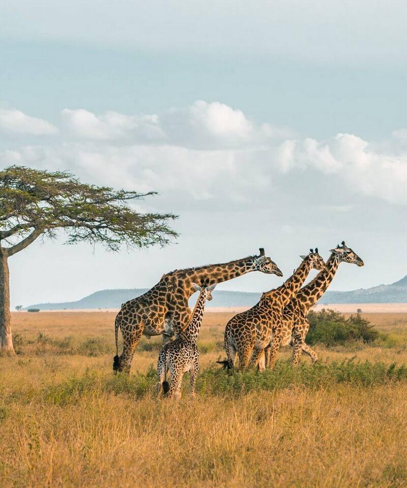 Nyika Discovery - Tarangire national park, Serengeti national park and Ngorongoro conservation area - 6 days
