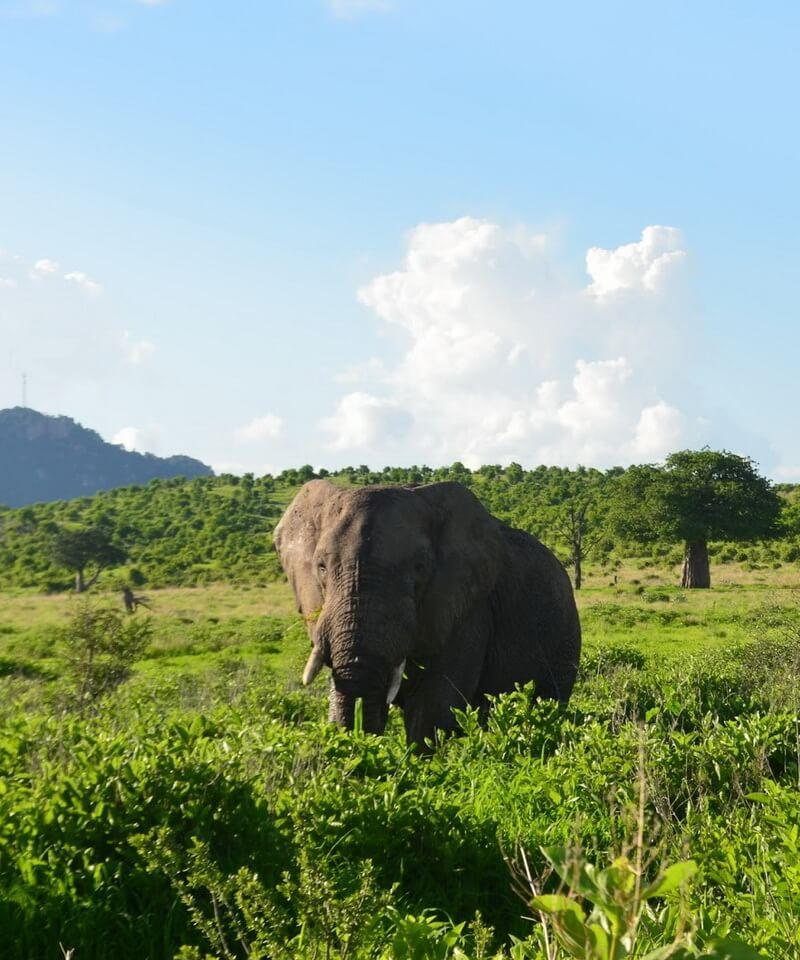 Nyika Discovery - Tarangire national park, Serengeti national park and Ngorongoro conservation area camping - 4 days