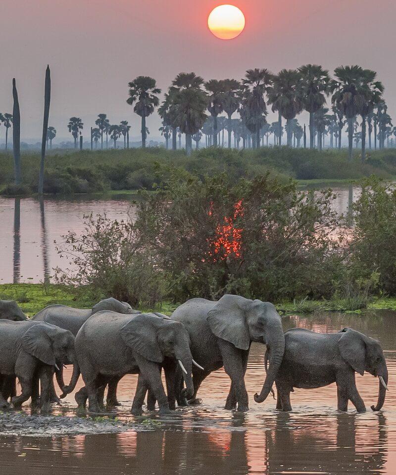 Nyika Discovery - Tarangire national park, Serengeti national park and Ngorongoro conservation area mid range - 4 days