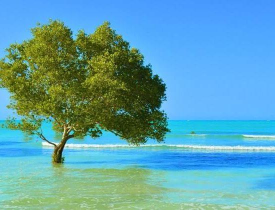 Nyika Discovery - Zanzibar beach vacation - 4 days 03