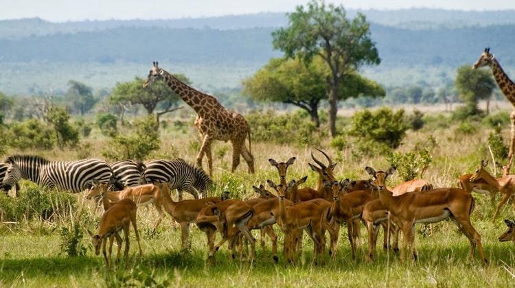 Nyika Discovery - Safari Destinations - Mikumi national park 7