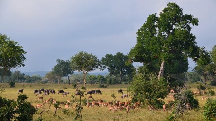 Nyika Discovery - Safari Destinations - Mikumi national park 8