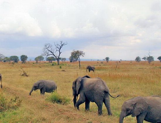 Nyika Discovery - Tarangire national park, lake Manyara and Ngorongoro crater - 3 days 02