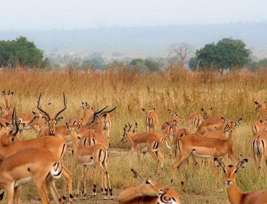 Nyika Discovery - Tarangire national park, lake Manyara and Ngorongoro crater - 3 days 04